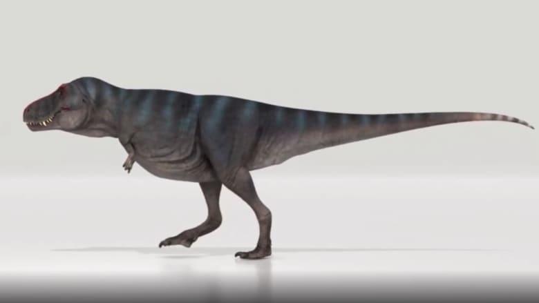 """""""تي ركس"""" كان يسير بسرعة البشر.. مفاجأة بشأن حركة الديناصور العملاق"""