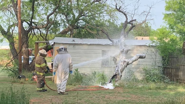 سرب نحل قاتل يهاجم رجلا.. ويقتله أثناء جزه العشب في تكساس