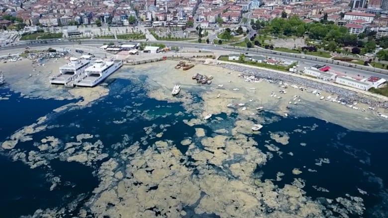 """شاهد """"الصمغ البحري"""" الذي يشبه الوحل.. يقتل الحياة البحرية تحت سطح الماء في تركيا"""