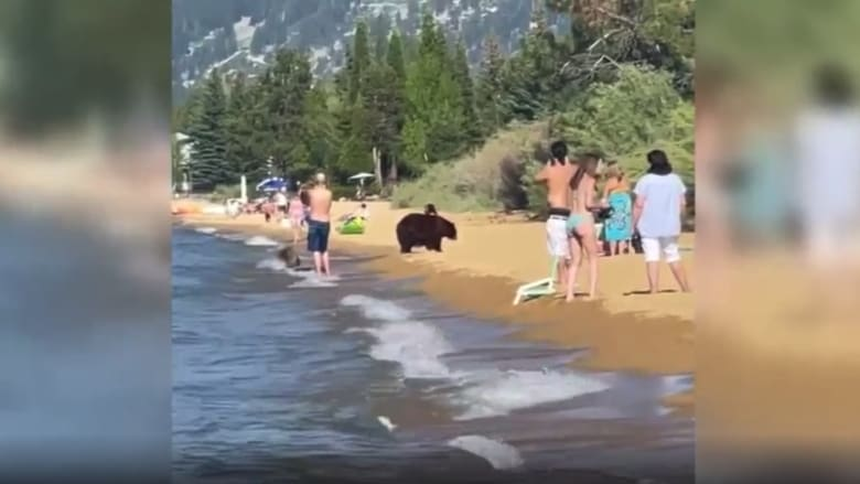 شاهد.. رد فعل رواد شاطئ عندما تفاجأوا بوجود دب ضخم بينهم