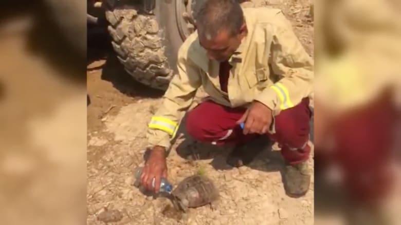 شاهد.. رجل إطفاء ينقذ سلحفاة وسط حرائق الغابات في تركيا ويسقيها الماء