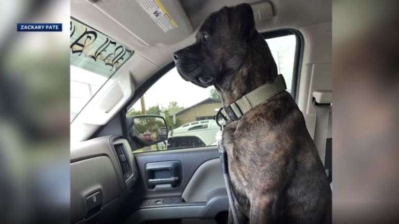 شاهد ما فعله كلب عندما رصد أفعى عملاقة تحاول لدغ صاحبه