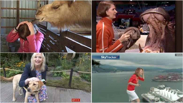 مشاهد طريفة.. مراسلون قالوا كلمات مشهورة عن الحيوانات انقلبت ضدهم