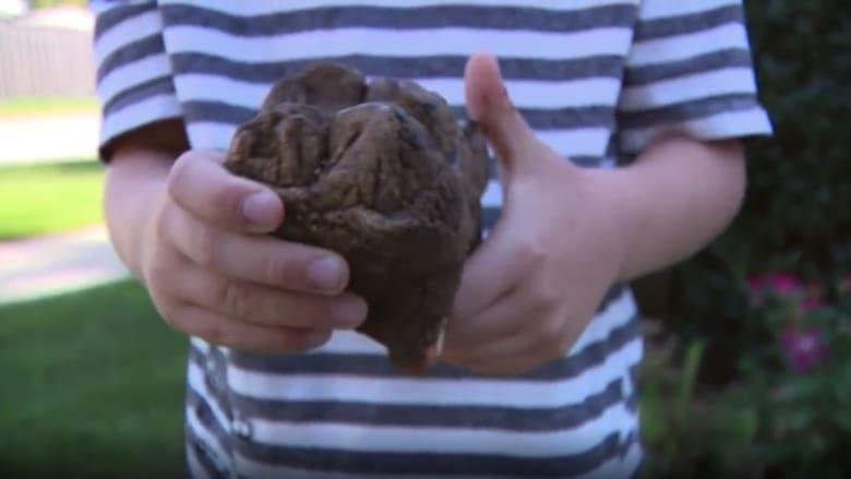 شاهد.. طفل يعثر بالصدفة على أسنان حيوان انقرض قبل 12 ألف عام