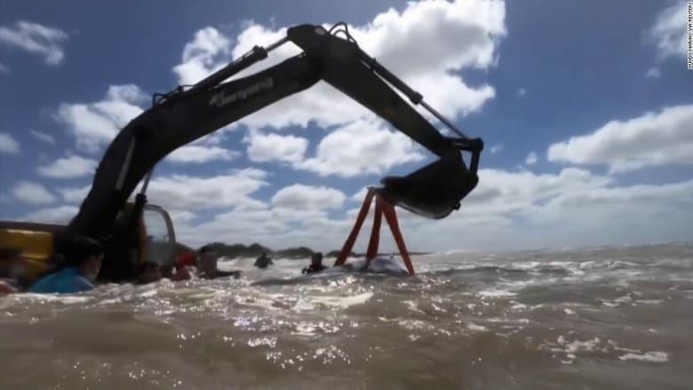 211006153400-screengrab-whale-stranded-in-argentina-super-169.jpeg