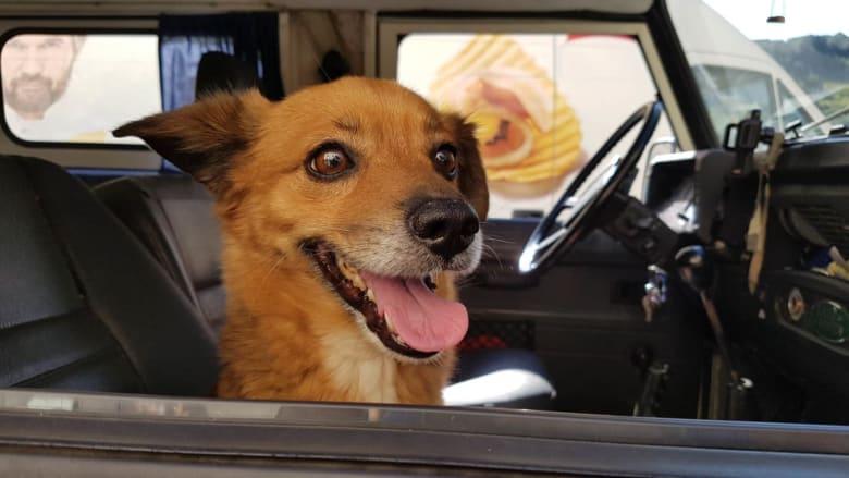 من هو الكلب الذي أنقذ حياة صاحبه من الفيضان الذي ضرب Cinque Terre؟