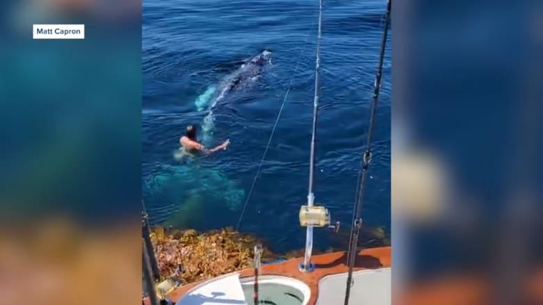 رحلة اعتيادية لصيد تونة زرقاء.. تتحول إلى إنقاذ حوت مقيد لا يستطيع الحراك وسط البحر