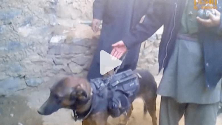 """طالبان تأسر كلباً برتبة """"عقيد"""" في حلف الناتو"""