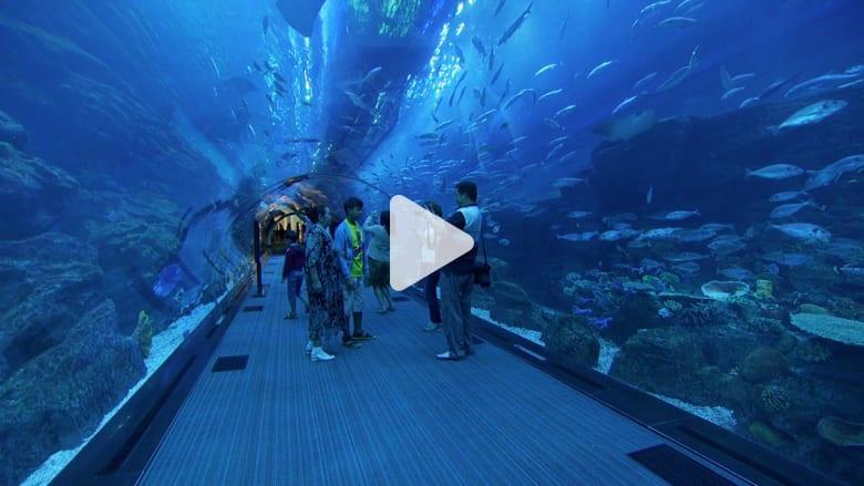 دبي.. من داخل أكبر حوض للأسماك في العالم