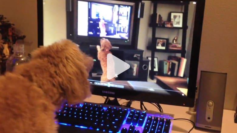 كلب لا يحب رؤية نفسه على الكاميرا