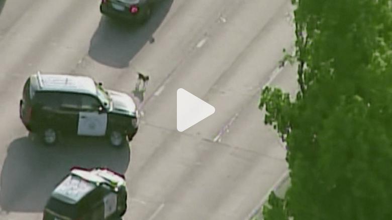 أمريكا.. مطاردة كلب تغلق أحد الشوارع السريعة