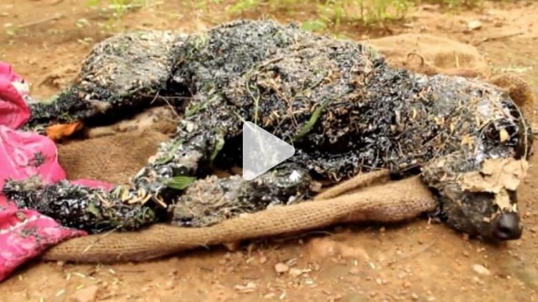 بالفيديو.. كلب محظوظ ينجو بأعجوبة بعدما علق في بقعة من القطران الحار