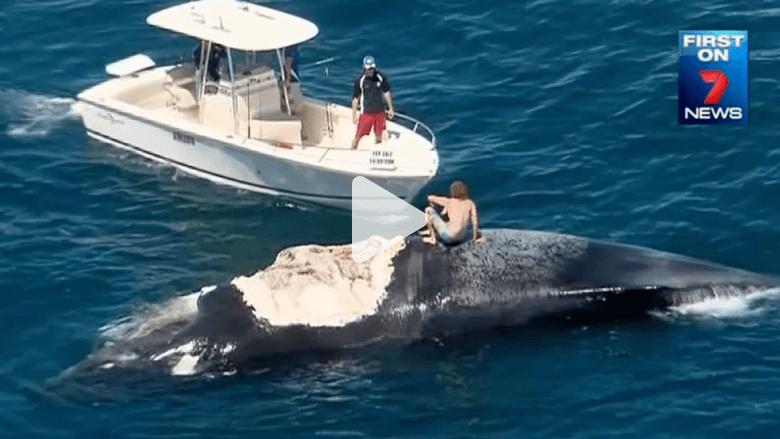 رجل ينجو بأعجوبة من أسماك قرش بعد الإبحار على ظهر حوت