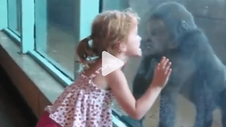 بالفيديو.. مشاهد مضحكة ومخيفة لأطفال داخل حديقة الحيوانات