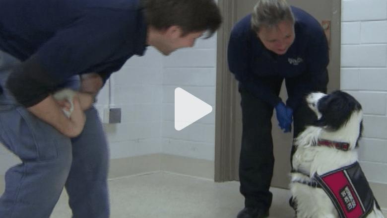 استخدام الكلاب للكشف المبكر عن السرطان