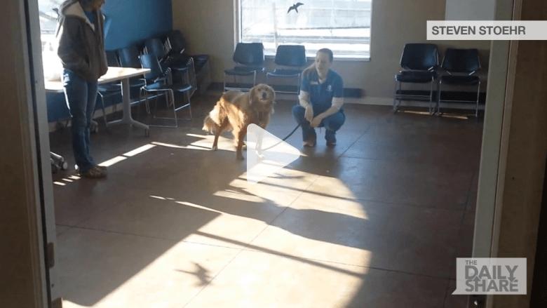 شاهد لقاء كلب مع عائلته بعد 20 شهرا