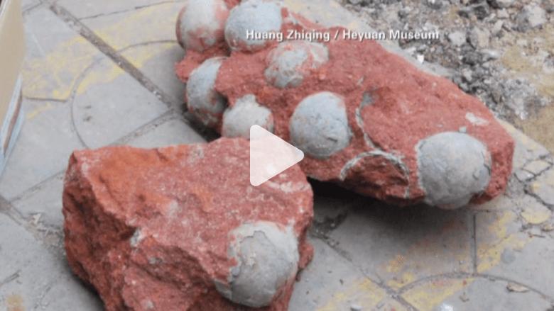 بالفيديو.. عمال بناء يعثرون على العشرات من بيض الديناصورات بالصين