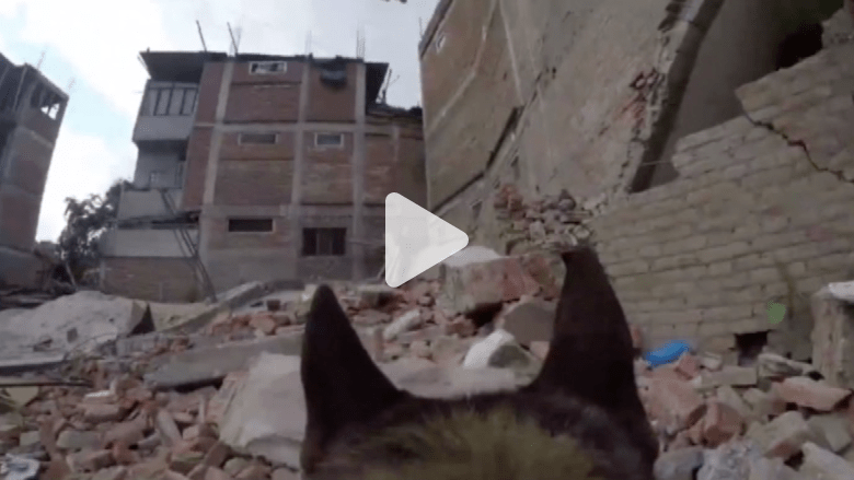 """البحث عن ناجين بين أنقاض كاتماندو من وجهة نظر """"كلب إسرائيلي"""" ضمن فريق انقاذ"""