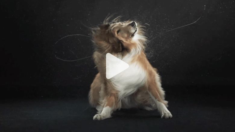 هل تحسن هذه الكلاب فعلا الرسم أفضل من بعض الرسامين الكبار؟
