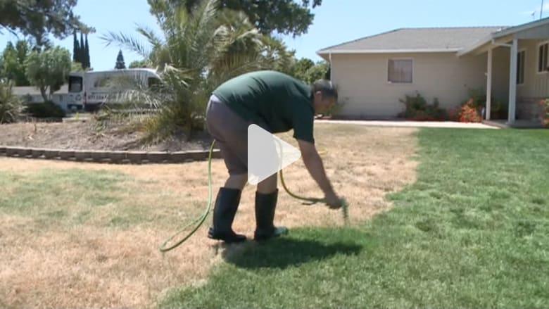 رسام على العشب.. يحل مشكلة جفاف حدائق المنازل