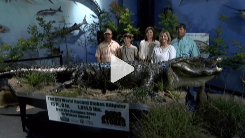 بالفيديو.. تمساح ضخم للعرض في متحف مونتغمري
