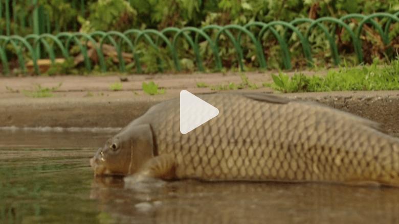 بالفيديو.. شاهد نعمة الفيضان.. الأسماك في الشوارع والصيد بالأيدي
