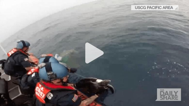 شاهد بالفيديو.. خفر السواحل الأمريكي يتحرك لإنقاذ سلحفتين علقتا بالشباك