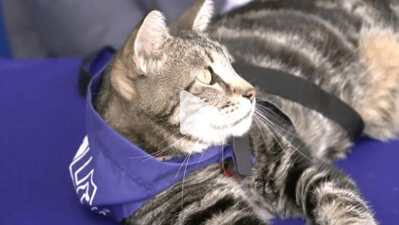 بالفيديو.. قطة تفوز بجائزة الكلب البطل الوطنية!!