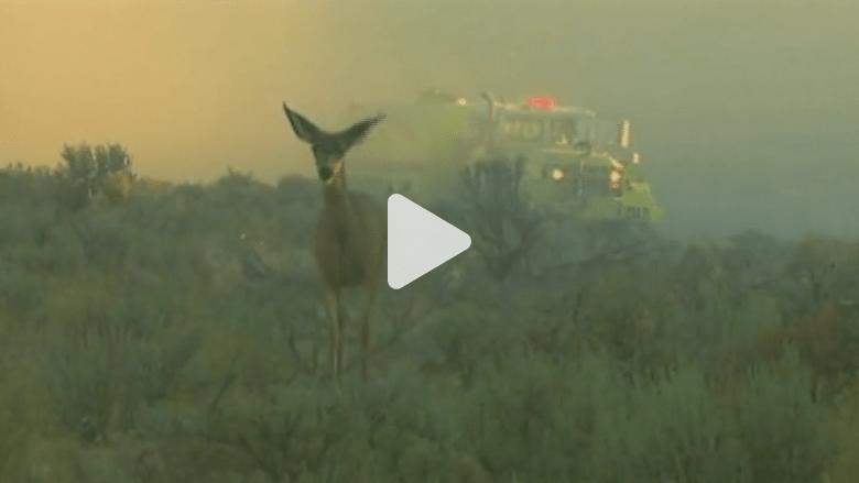 مشاهد من حرائق الغابات في ولاية واشنطن