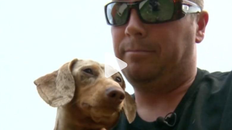 رجل يلكم أسدا جبليا.. لينقذ كلبته الصغيرة