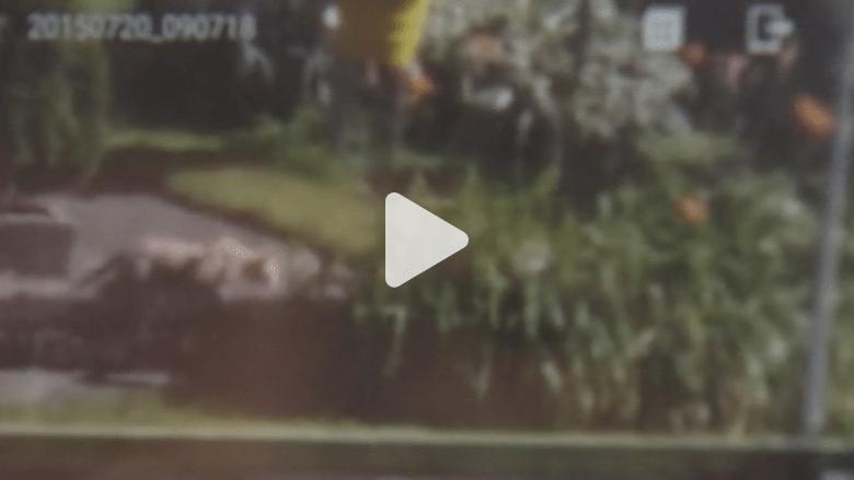 بالفيديو.. أسد يتجول بين المنازل يثير الرعب في ويسكنسن