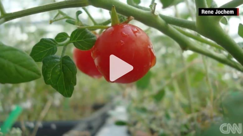 """بالفيديو: """"خضروات فضائية """".. هل تصلح للأكل؟"""