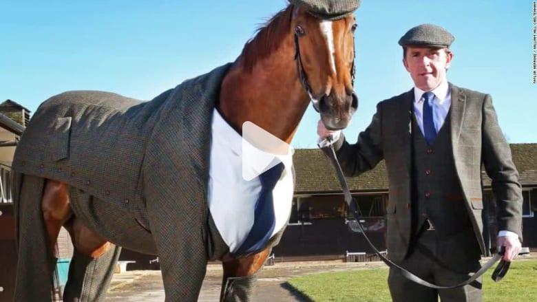 هل هذا الحصان الأكثر أناقة بين الأحصنة؟