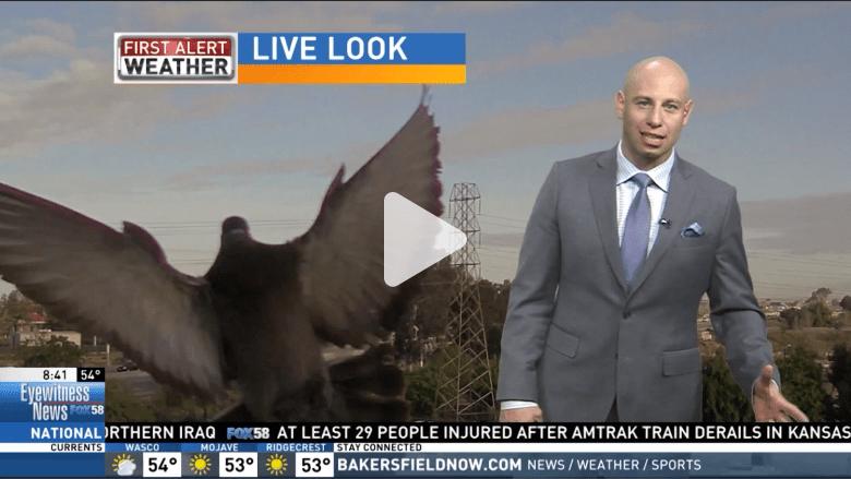 طائر يهاجم مذيع النشرة الجوية.. شاهد ردة فعل المذيع على الهواء مباشرة!