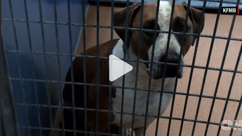 بالفيديو: كلب يقتل رضيعاً يبلغ ثلاثة أيام من العمر