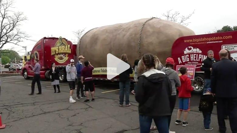 بالفيديو: حبة بطاطس عملاقة تتجول في شوارع أمريكا.. والسبب!