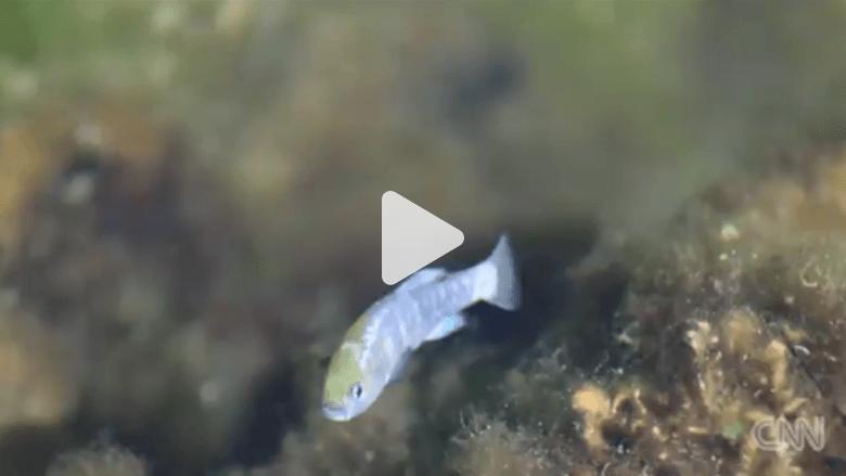 مخربون يقتلون سمكة نادرة في أحد المنتزهات