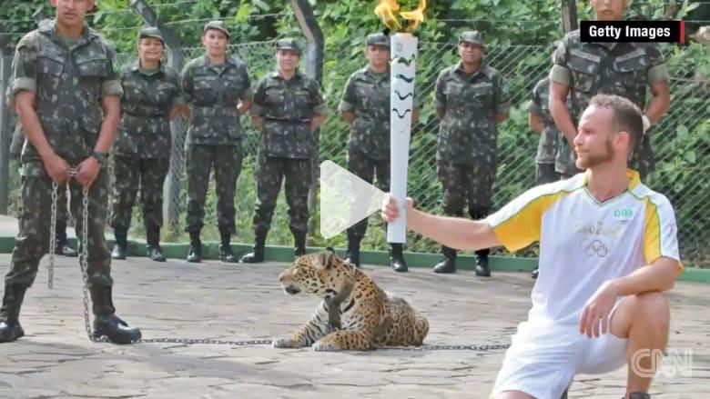 """بالفيديو: إطلاق الرصاص على نمر أمريكي خلال حفل لأولمبياد """"ريو 2016"""""""