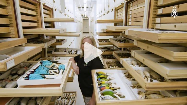 ما هي الكنوز التاريخية التي تحويها هذه المكتبة؟