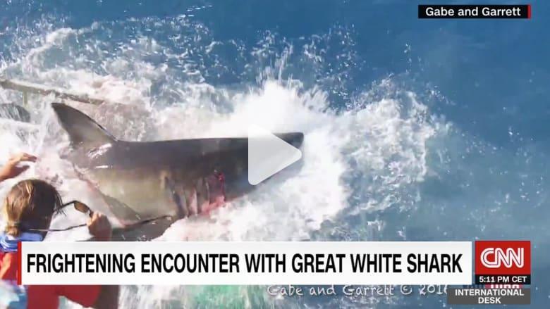 مواجهة مرعبة.. قرش أبيض يقتحم قفص داخله غواص