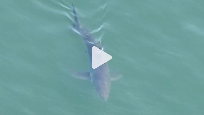 مشهد مرعب.. عشرات أسماك القرش الأبيض الكبير تحاصر رياضيين وسط المياه