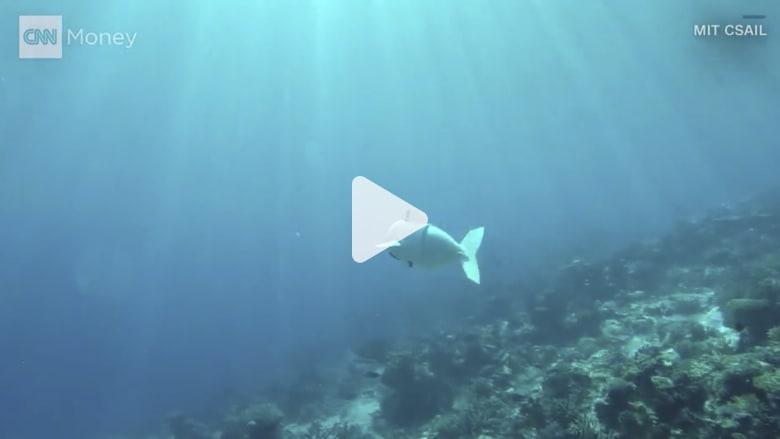 صوفي.. روبوت يجوب البحر مع الأسماك!