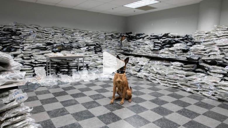 شرطي كلب يكتشف بأنفه ما يساوي 10 ملايين دولار من الماريجوانا