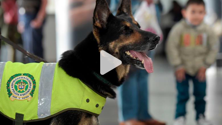 عصابة كولومبية تعرض مبلغ 70 ألف دولار مقابل رأس هذه الكلبة