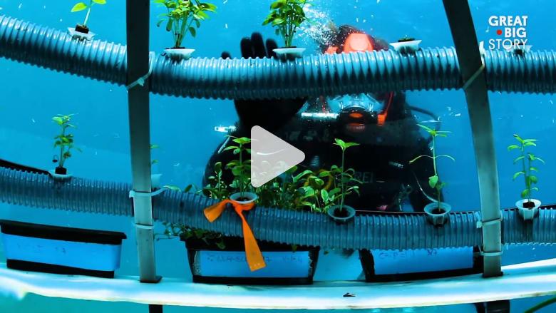 الزراعة تحت الماء حلم قد يكون حقيقة بمشروع حديقة نيمو