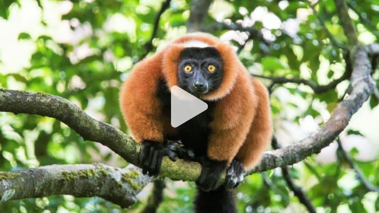 أين تقع أندر النباتات والحيوانات في العالم؟