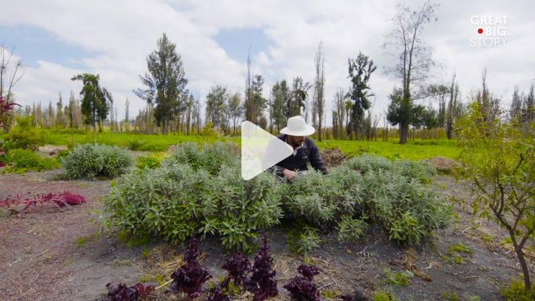 في هذه المزارع العائمة.. تنمو بعض من أفضل منتجات المكسيك