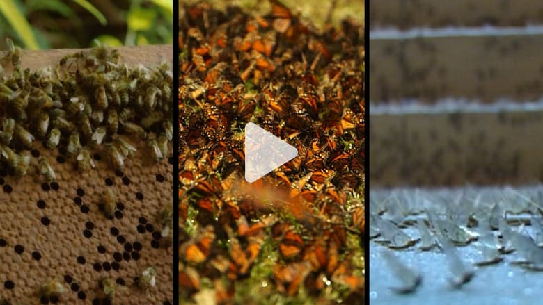 """دراسة.. انقراض أصناف حشرات قد يكون """"كارثياً"""" على الأرض"""