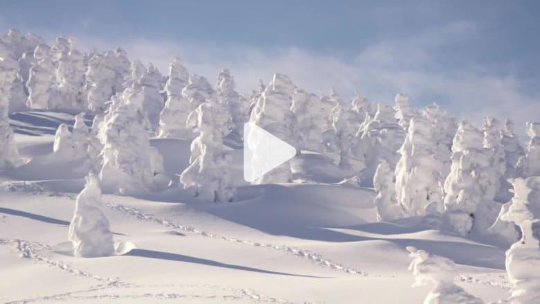 """تزلج بين """"الوحوش الثلجية"""" في اليابان"""