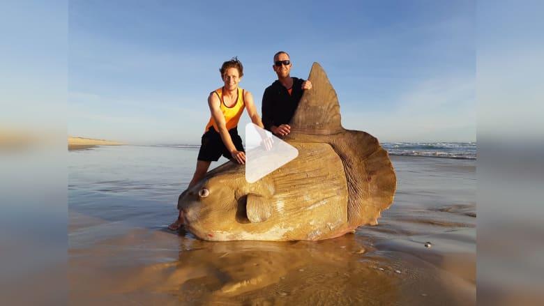 190320091552-sunfish-murray-river-australia-03182019.jpg